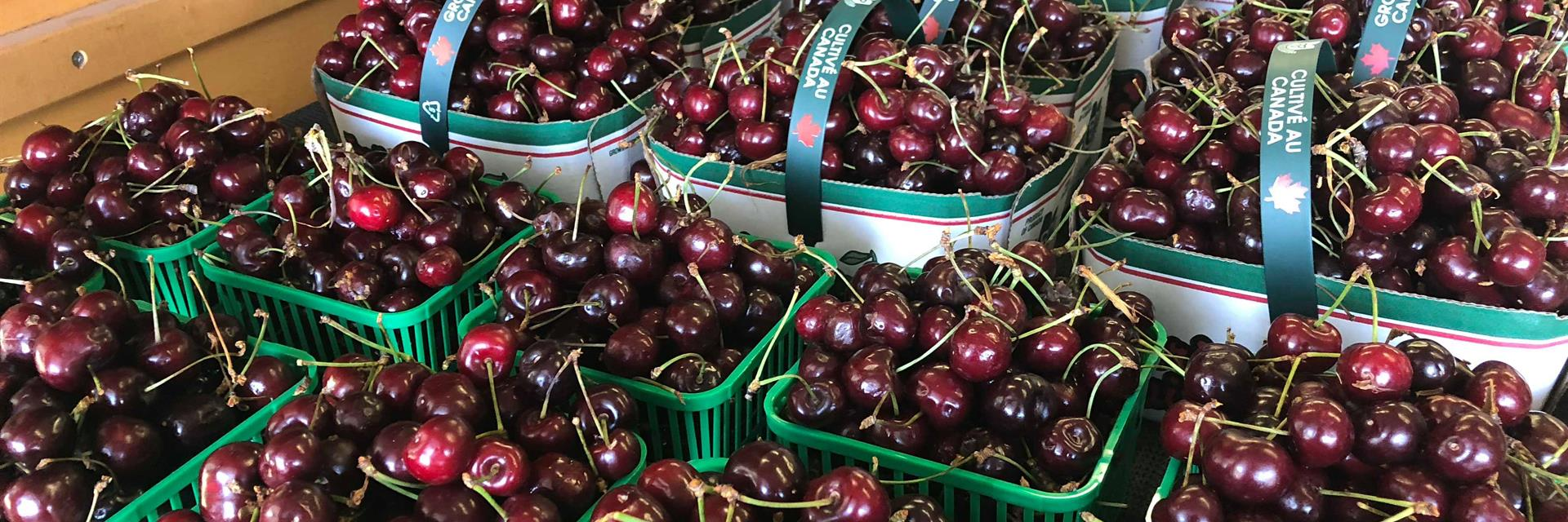 box of cherries from an orchard in blenheim