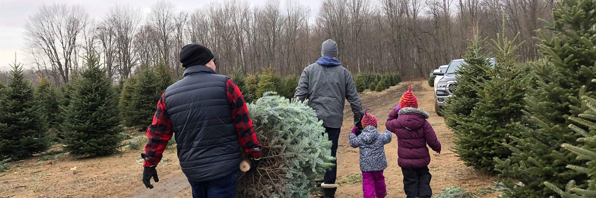 men with christmas trees and children in a farm carrying the tree